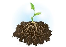 Plantversterking